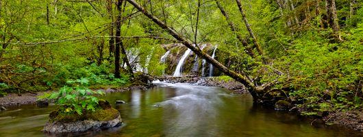 Фото бесплатно Beaver Falls, Olympic, Peninsula
