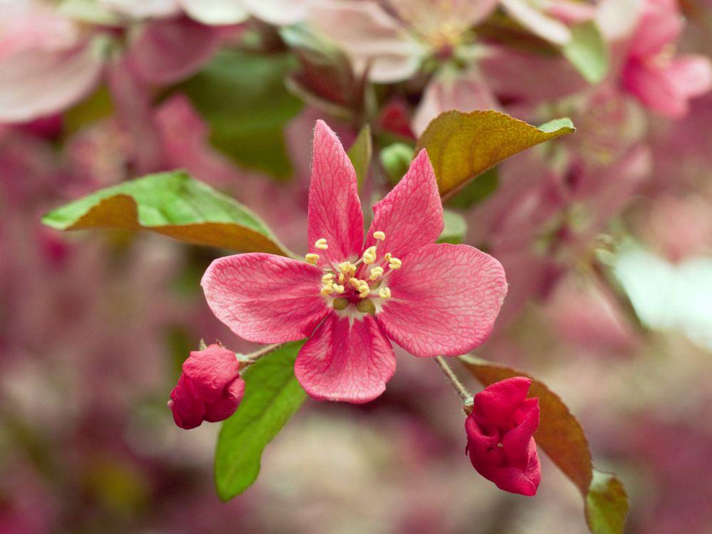 Цветы весной · бесплатная заставка