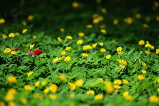 Photo free wild flower, shrub, flowers