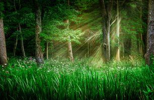 Бесплатные фото лес,деревья,растения,цветы,лучи солнца,природа