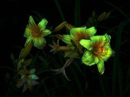 Flower background mood on black · free photo