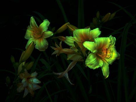 Цветок фон настроения на черном · бесплатное фото