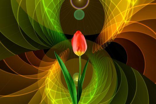 Фото бесплатно тюльпан, икебана, флора