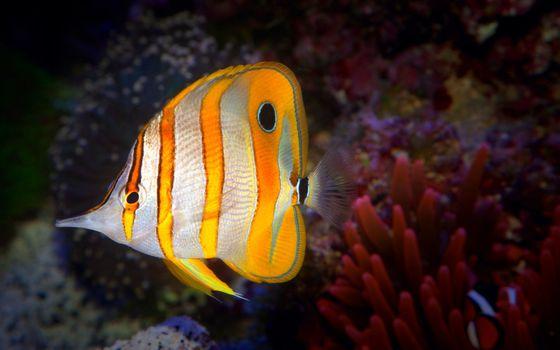 Фото бесплатно под водой, рыба, аквариум