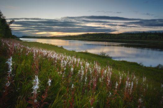 Цветущий сибирский берег · бесплатное фото