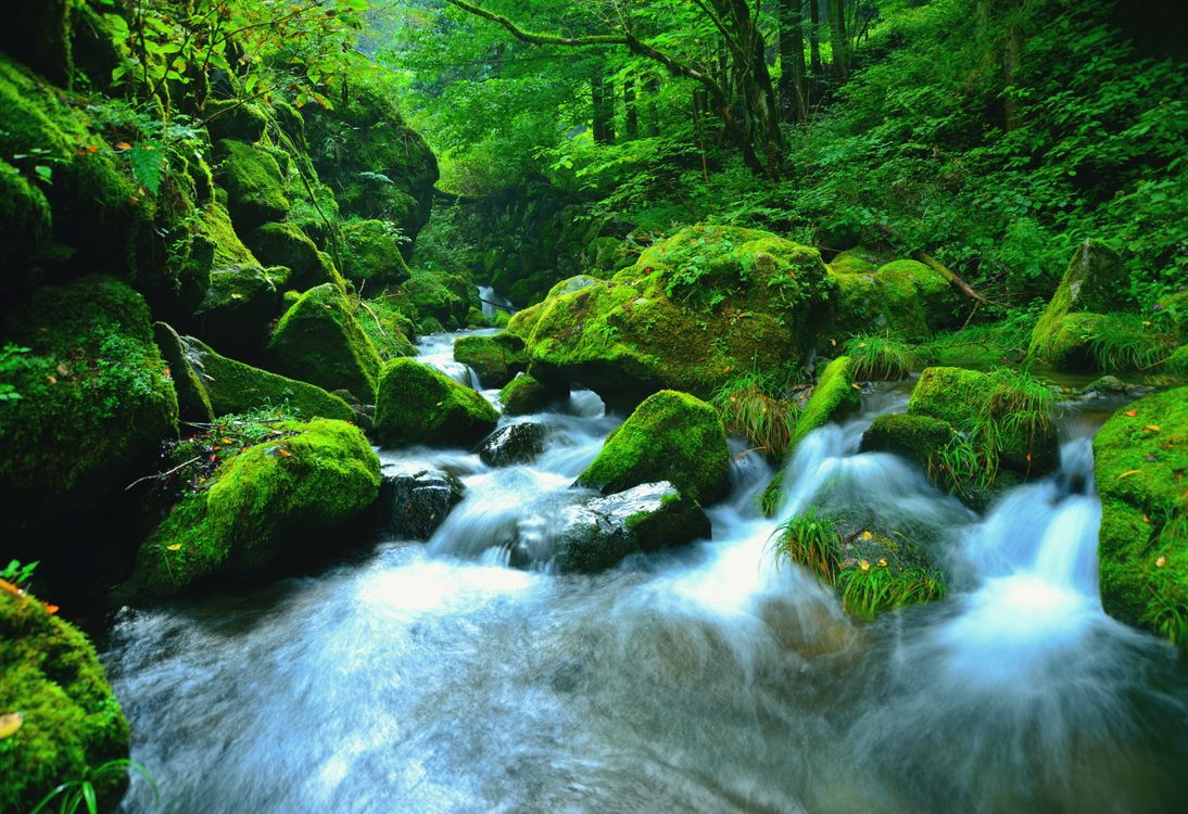 Free photo landscape, Japan, nature - to desktop