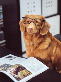 Фото бесплатно животные, милый, собака