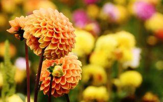 Бесплатные фото цветок,лепесток,цветение,осень,ботаника,рыжих,сад