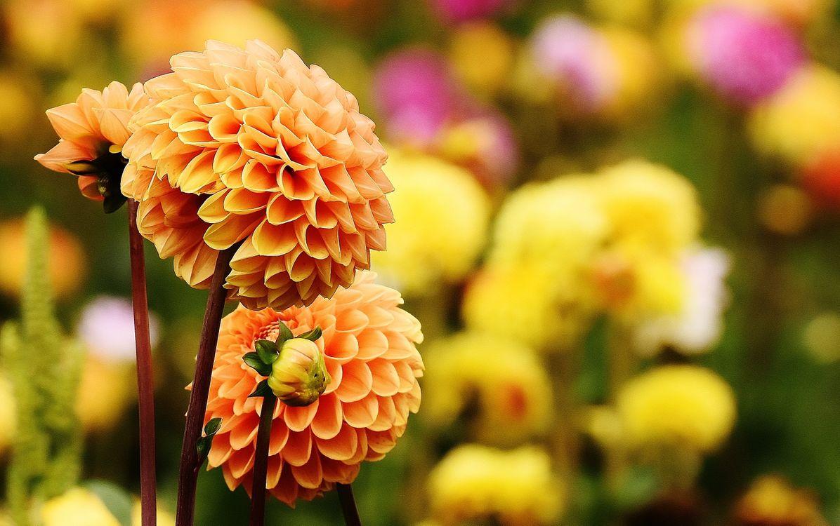 Фото бесплатно цветок, лепесток, цветение - на рабочий стол