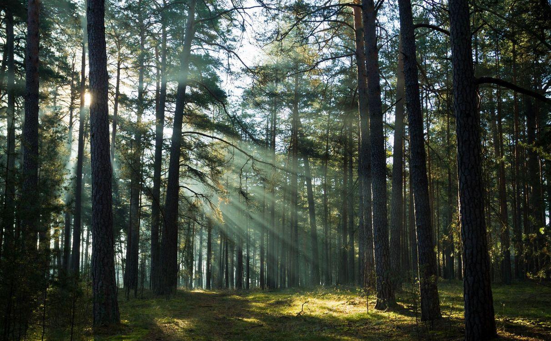 Обои лес, лучи, деревья картинки на телефон