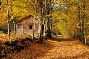 Заставки краски осени,осенние краски,осень,лес,деревья,дорога,домик
