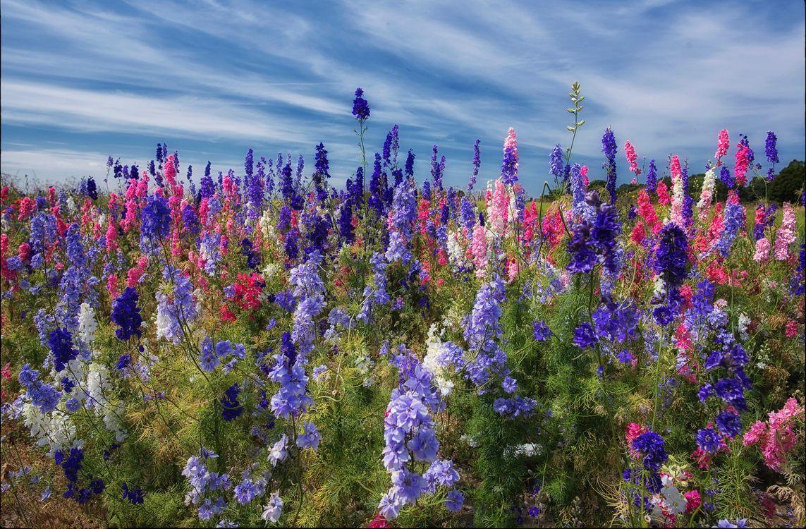 поле цветов · бесплатное фото