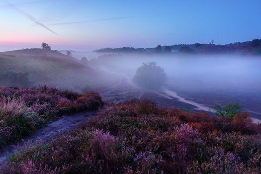 Фото бесплатно закат, пейзаж, дерево