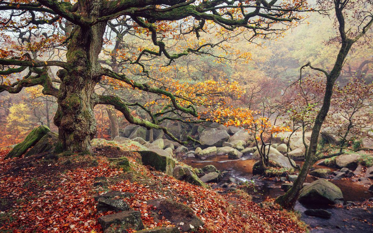 Обои осенние листья, ручей, осень картинки на телефон
