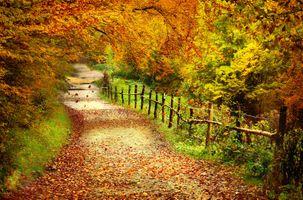 Заставки осень, лес, деревья