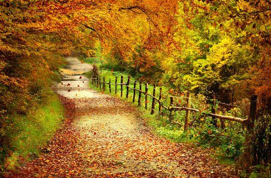 Фото бесплатно деревья, дорога, осенние листья