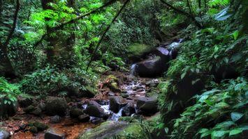 Заставки пейзаж, деревья, ручей