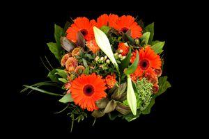 Бесплатные фото цветы,букет,герберы,чёрный фон,флора