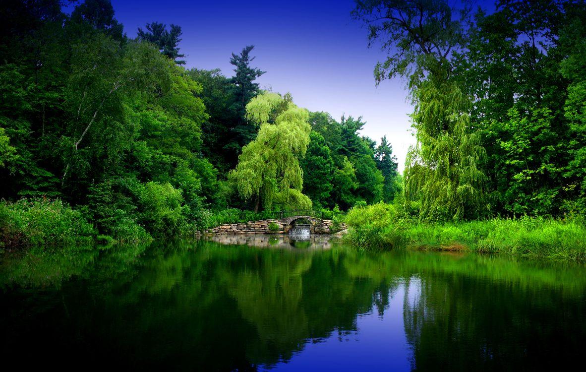 Фото бесплатно водоём, водопад, лес, деревья, мост, небо, зелёный, природа, пейзаж, пейзажи