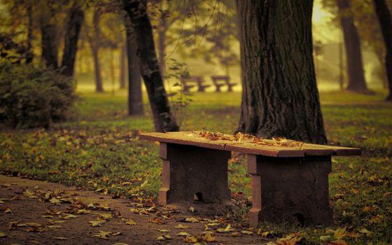 Фото бесплатно путь, природа, дорога