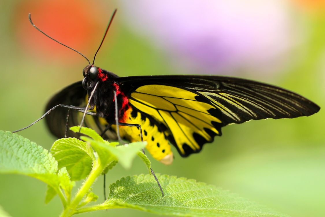 Beautiful butterfly on a green leaf · free photo