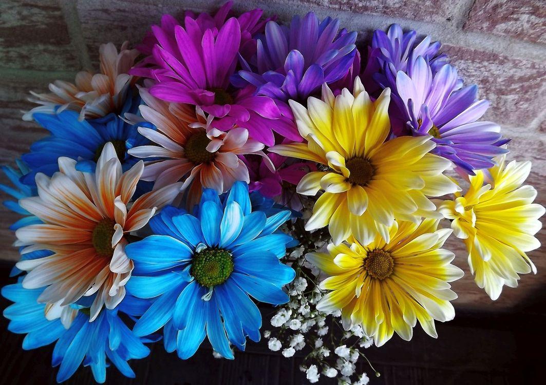 Обои Красивый букет, букет, цветочная композиция, флора, цветы, цветок, цветочный, оригинальный, красочный, праздничный букет, хризантемы на телефон | картинки цветы
