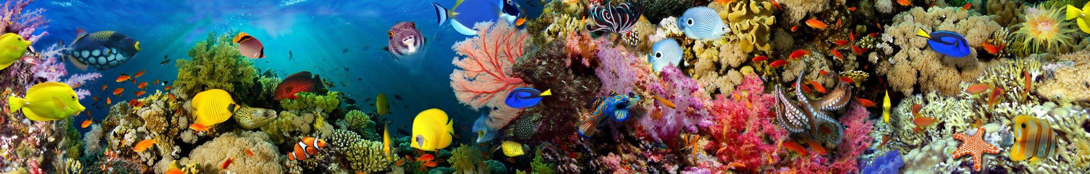 Бесплатные фото море,рифы,рыбы,морское дно,art,панорама
