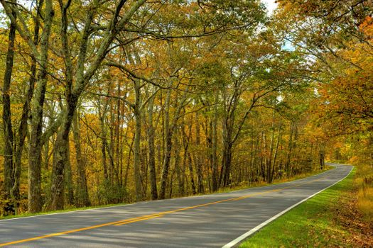 Photo free autumn road in the forest, landscape, road