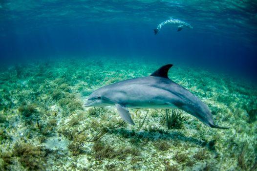 Фото бесплатно свет, море, дно