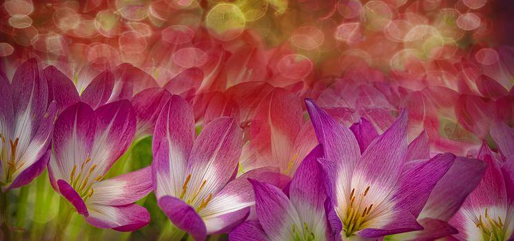 Заставки цветок, панорама, макро