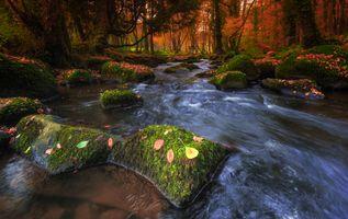 Фото бесплатно осенние краски, река, природа