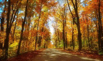 Бесплатные фото осенние краски,дорога,краски осени,парк,осень,осенние листья,деревья