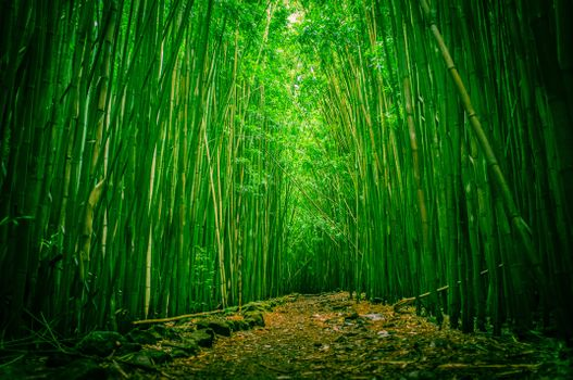 Photo free bamboo, clearing, forest