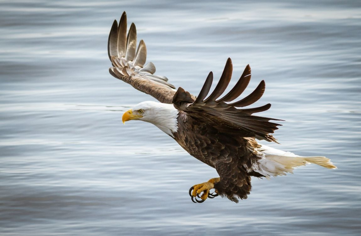 Photos for free bird, eagle, flight - to the desktop