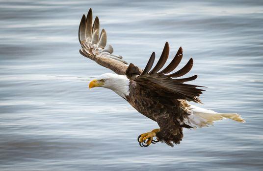 Фото бесплатно птица, орел, полет