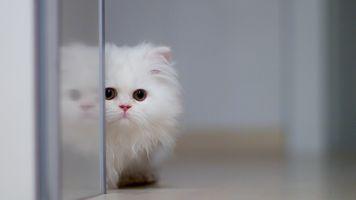 Фото бесплатно котенок, пушистый, милый
