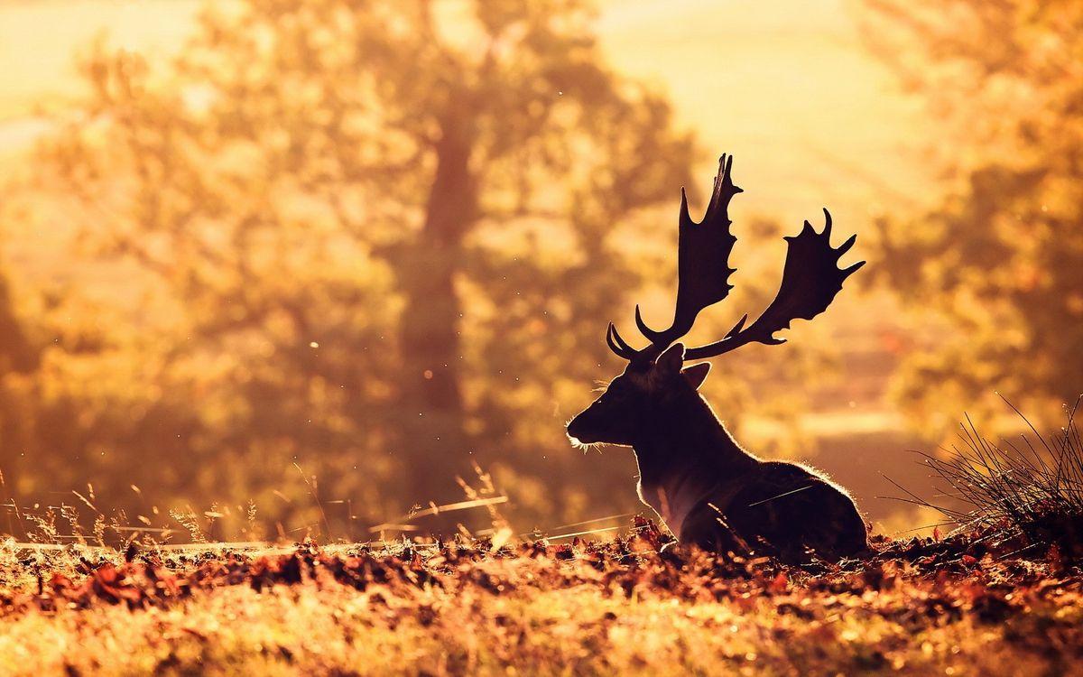 Фото бесплатно осень, олень, животные - на рабочий стол