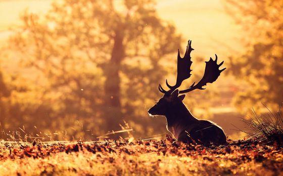 Заставки осень, олень, животные