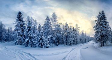 Бесплатные фото Финляндия,зима,дорога,развилка,закат,лес,деревья