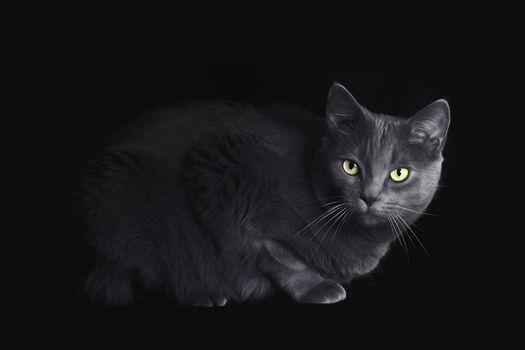 Photo free black background, pet, muzzle