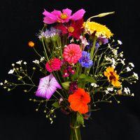Фото бесплатно красочный, праздничный букет, букет