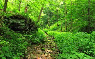 Заставки Старая тропа, лесная тропа, зелень