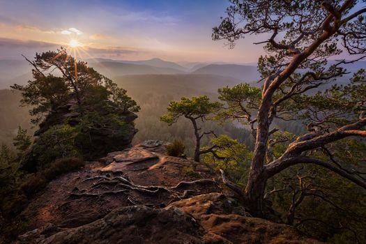 Photo free sun, sunrise, trees