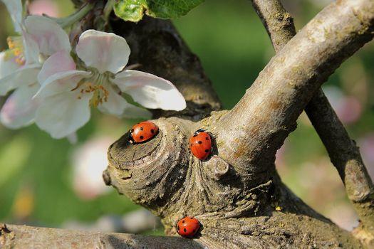Photo free Apple tree, spring, bloom