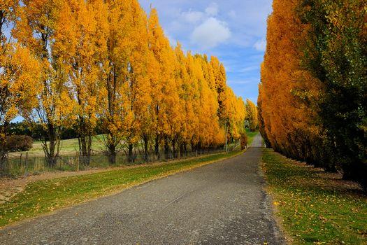 Фото бесплатно осень дорога, осенние листья, природа