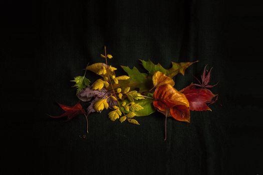 Фото бесплатно чёрный фон, осень, листья