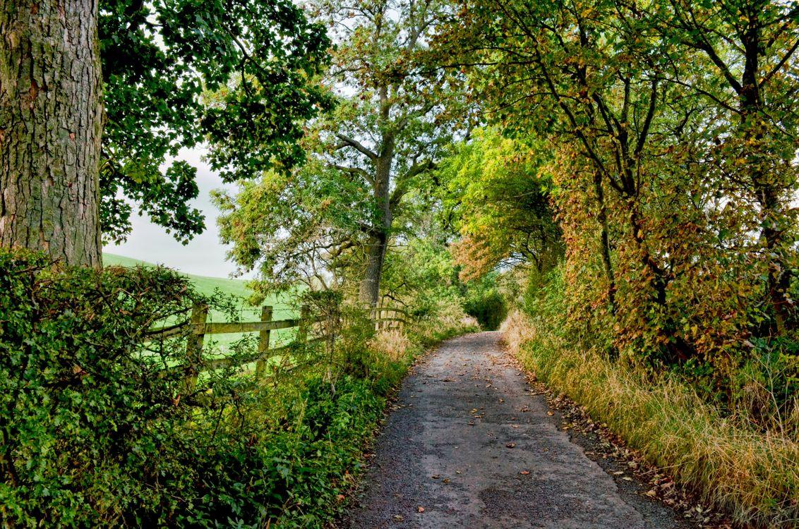 Фото бесплатно забор, тропа, тропинка, природа, дорога, деревья, лес, трава, летний день, природа