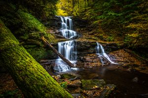 The Creek in the Park Ricketts Glen · free photo