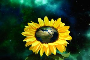 Бесплатные фото подсолнух,подсолнухи,цветы,флора