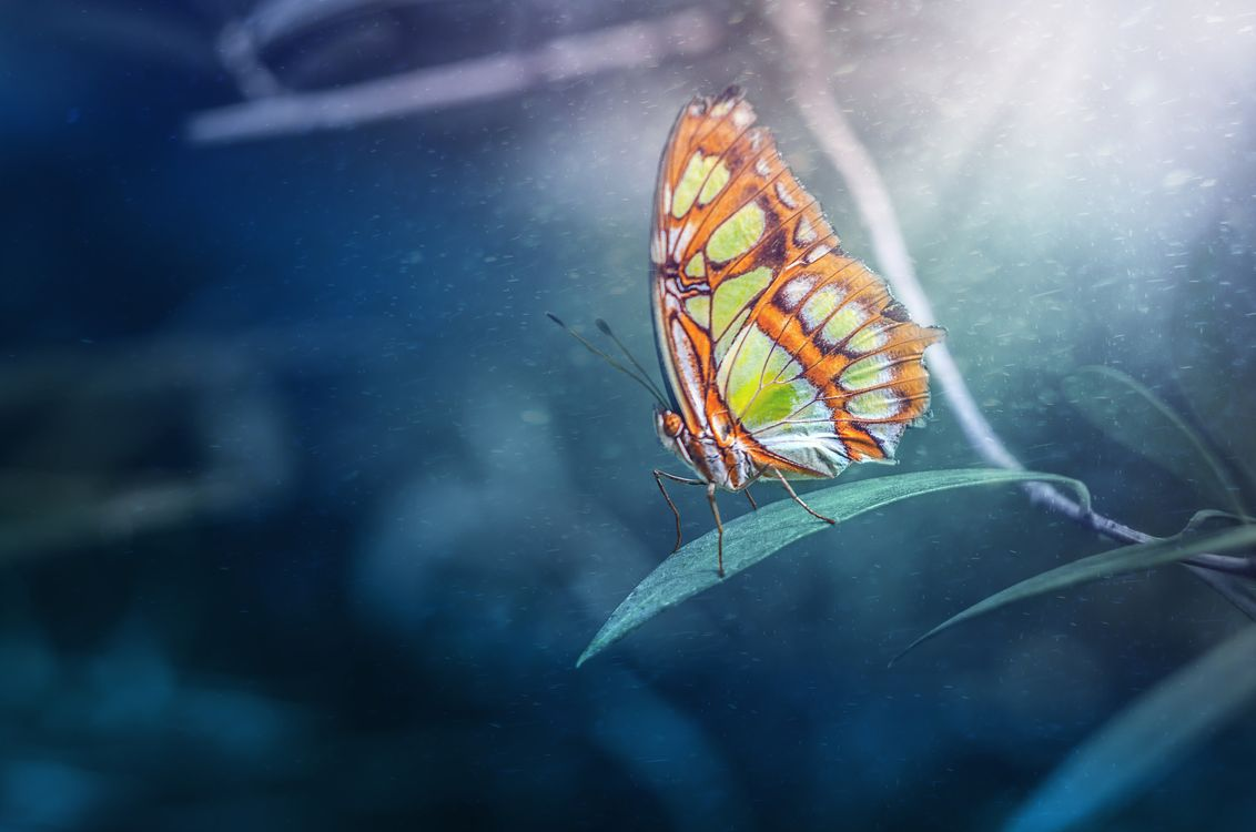 Фото бесплатно растение, бабочка, насекомое, макро, насекомые